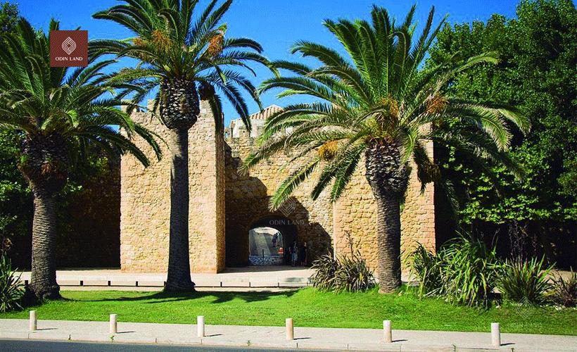Khuôn viên xanh của dự án.