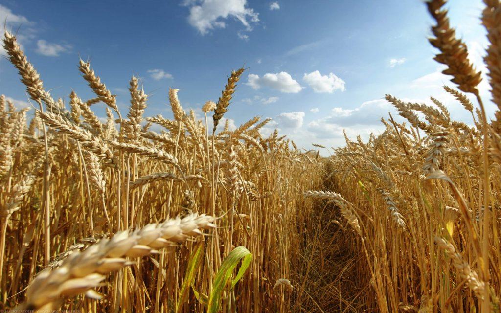 kinh tế Úc - nông nghiệp